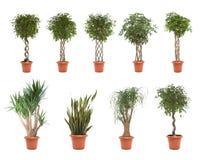 Plantes en pot Photo stock