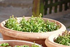Plantes en pot Photo libre de droits