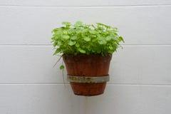 Plantes en pot sur le mur Photographie stock