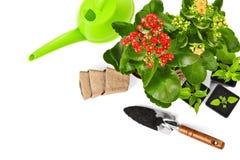 plantes et fleurs de jardin Photos libres de droits