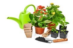 plantes et fleurs de jardin Photos stock