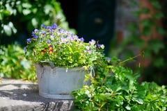 Plantes et fleurs de Variuos dans des pots colorés par un seuil Photos libres de droits