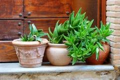 Plantes et fleurs de Variuos dans des pots colorés par un seuil Image libre de droits