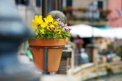 Plantes et fleurs de Variuos dans des pots colorés par un seuil Photo libre de droits