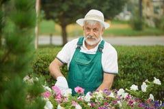 Plantes et fleurs masculines d'élagage de jardinier de travailleur images libres de droits