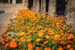 Plantes et fleurs mises en pot sur les rues de Cordoue, Espagne images stock