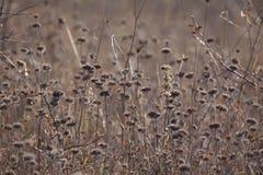 Plantes et fleurs sèches d'automne dans le pré Fond Image libre de droits