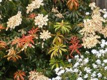 Plantes et fleurs se mélangeant Photo libre de droits