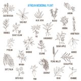 Plantes médicinales africaines Illustration de Vecteur