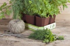 Plantes mises en pot épicées cultivées à la maison Photos libres de droits