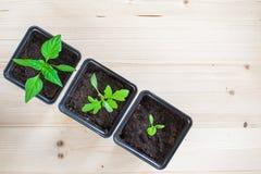 Plantes mises en pot Photos stock