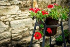 Plantes mises en pot et fleurs rouges sur la rue images stock