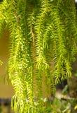 Plantes ornementales Image libre de droits