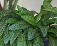 Plantes ornementales Photos libres de droits