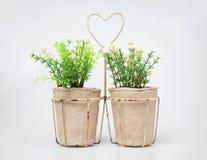Plantes ornementales dans la tasse de carton sur le blanc Photos stock