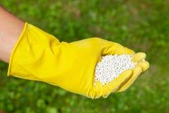 Plantes, pelouses, arbres et fleurs de fertilisation Le jardinier dans les gants tient les boules blanches d'engrais sur l'herbe images stock