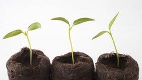 plantes trois Images stock