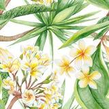 Plantes tropicales d'aquarelle Photos stock