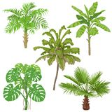 Plantes tropicales d'isolement illustration stock