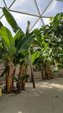 Plantes tropicales de Biodome Photographie stock