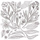Plantes tropicales de vecteur réglées Image stock