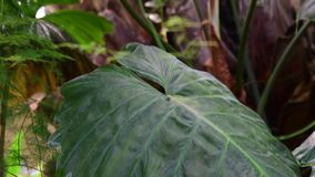 Plantes tropicales et arbre dans le jardin botanique Serre chaude botanique Intérieur de serre Fond tropical 4K banque de vidéos