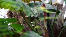 Plantes tropicales et arbre dans le jardin botanique Serre chaude botanique Intérieur de serre Fond tropical 4K clips vidéos