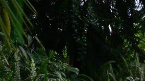 Plantes tropicales et arbres dans le jardin botanique Serre chaude botanique Intérieur de serre 4K banque de vidéos