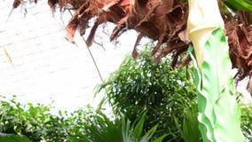 Plantes tropicales et arbres dans le jardin botanique Serre chaude botanique 4K clips vidéos