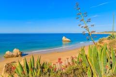 Plantes tropicales et vue de plage Photos libres de droits