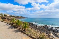 Plantes tropicales sur la promenade côtière de Blanca de Playa Image libre de droits