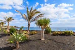 Plantes tropicales sur la promenade côtière de Blanca de Playa Image stock