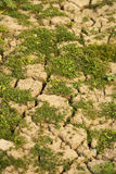 Plantes vertes élevant le sol mort de cuvette photo libre de droits