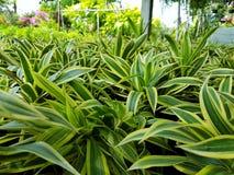 Plantes vertes stockbild