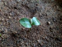 Plantes vertes lizenzfreies stockbild