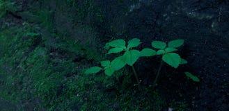 Plantes vertes stockfotos
