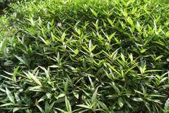 Plantes vertes Images libres de droits
