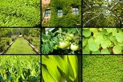 Plantes vertes Photos stock