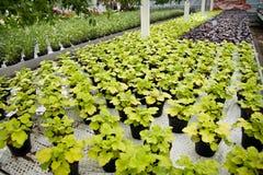 Plantes vertes Photos libres de droits