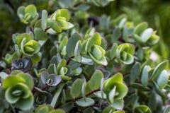 Plantes vertes photographie stock libre de droits
