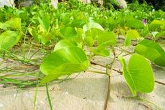 Plantes vertes Image libre de droits
