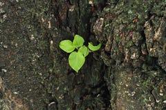 Plantes vertes Stockfotografie