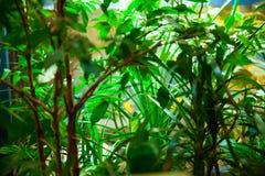 Plantes vertes Stockfoto