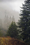 Plantes vertes, automne, montagnes fumeuses grandes photos libres de droits