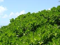 Plantes vertes avec le ciel Photos stock