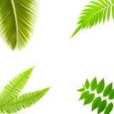 Plantes vertes d'isolement sur le fond blanc photographie stock libre de droits