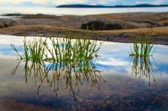 Plantes vertes dans l'eau silencieuse Photographie stock