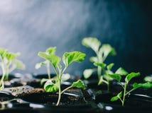 Plantes vertes dans la chambre Images stock