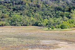 Plantes vertes dans la forêt sur la colline Image libre de droits