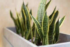 Plantes vertes dans le bureau moderne Concept du travail sain images stock